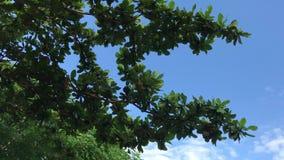 Árboles en un fondo del cielo Conducción de la vespa Capturado de la moto con el stadycam asia almacen de metraje de vídeo