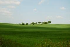 Árboles en un horizonte Fotos de archivo libres de regalías
