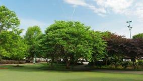 Árboles en un jardín Imagen de archivo