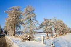 Árboles en un paisaje blanco del invierno Imagen de archivo
