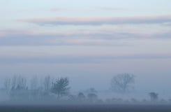 Árboles en un paisaje brumoso Imagen de archivo libre de regalías