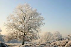 Árboles en un paisaje hivernal asoleado Imágenes de archivo libres de regalías