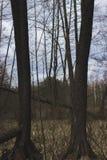 Árboles en un pantano Imagen de archivo libre de regalías