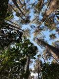 Árboles en un parque imagenes de archivo
