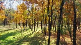 Árboles en un parque público en la caída Día asoleado almacen de metraje de vídeo