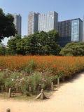 Árboles en un parque verde en Tokio Imágenes de archivo libres de regalías