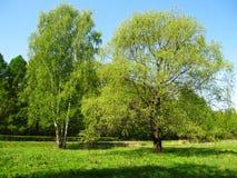 Árboles en un prado Fotos de archivo libres de regalías
