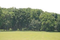 Árboles en un prado Imagen de archivo libre de regalías