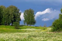 Árboles en un prado con una hierba Fotografía de archivo