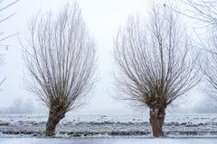 Árboles en un prado congelado en el Bos de Amsterdamse Foto de archivo