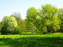 Árboles en un prado, resorte Imagen de archivo
