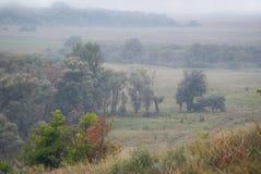 Árboles en un valle brumoso Fotografía de archivo libre de regalías