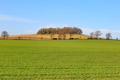 Árboles en una colina Fotos de archivo