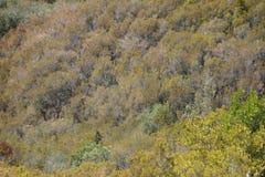 Árboles en una colina Imagen de archivo