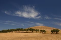 Árboles en una fila Foto de archivo