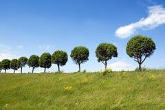 Árboles en una línea Imagen de archivo libre de regalías