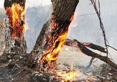 Árboles en una llama Imágenes de archivo libres de regalías