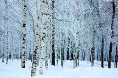 Árboles en una madera del invierno Imagenes de archivo
