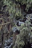 Árboles en una montaña Fotografía de archivo