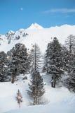 Árboles en una montaña imagenes de archivo