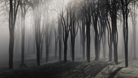 Árboles en una noche de niebla Fotografía de archivo libre de regalías