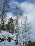 Árboles en una roca en los arroyos de Olenyi del parque natural en la región de Sverdlovsk imagen de archivo