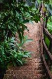 Árboles en una trayectoria abajo de un bosque imagen de archivo