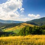 Árboles en valle de la montaña en la salida del sol Fotografía de archivo