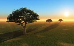 Árboles en verano tardío ilustración del vector