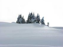 Árboles en witer Fotografía de archivo libre de regalías