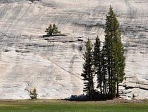 Árboles en Yosemite Foto de archivo libre de regalías