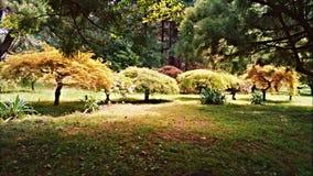 Árboles enanos Foto de archivo
