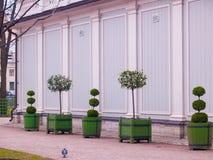 Árboles enanos figurados de diversas formas en tinas cerca del greenho Foto de archivo