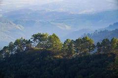 Árboles encima de las montañas Foto de archivo libre de regalías