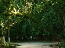 Árboles enormes en el parque imagen de archivo libre de regalías