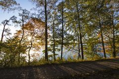 Árboles esbozados por el sol imagen de archivo