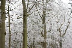 Árboles escarchados Fotografía de archivo libre de regalías