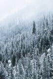 Árboles escarchados en invierno Imágenes de archivo libres de regalías