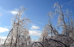 Árboles esmaltados de Frost imagen de archivo libre de regalías