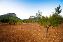 Árboles españoles bajo Sun Foto de archivo libre de regalías