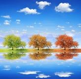 Árboles estacionales fotos de archivo libres de regalías