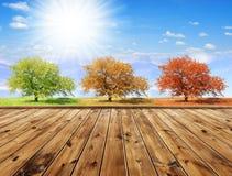 Árboles estacionales foto de archivo libre de regalías