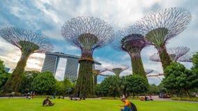 Árboles estupendos del aroundr del paseo de la gente de Timelapse en los jardines por la bahía Singapur En agosto de 2017 metrajes