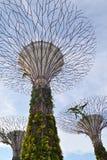 Árboles estupendos, Singapur Fotografía de archivo libre de regalías