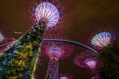 Árboles estupendos Singapur Imágenes de archivo libres de regalías
