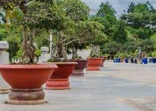 Árboles exóticos asiáticos en potes rojos Imágenes de archivo libres de regalías