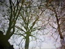 Árboles extraños Foto de archivo libre de regalías