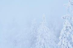 Árboles fabulosos en la nieve antes de la Navidad Mañana escarchada en la Feliz Año Nuevo del bosque Salida del sol hermosa Fotos de archivo libres de regalías