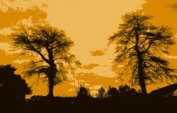 Árboles fantasmagóricos Imagenes de archivo