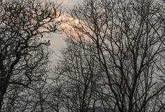 Árboles fantasmagóricos a lo largo de Ridge Parkway azul en última caída Foto de archivo